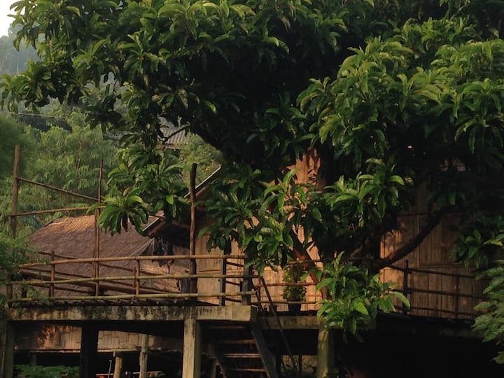 Tree House Homestay Akha