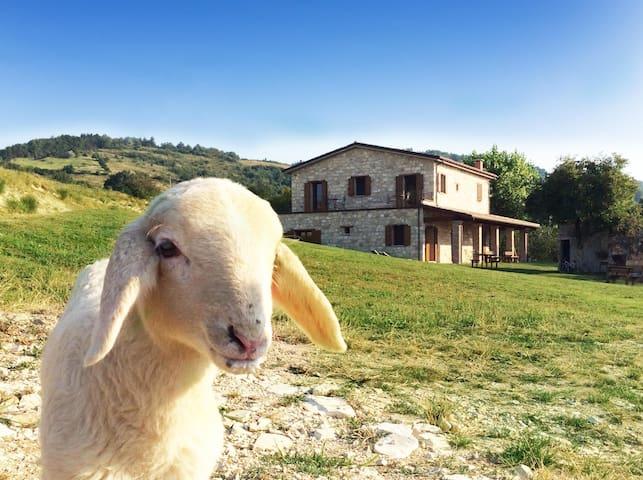 Agriturismo Bio L'A Ceccoli_Stanza Lilla - Sassofeltrio