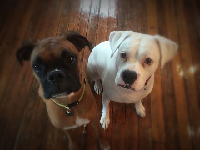 Buster & Rosa look forward to meeting your fur baby/babies. We have pet friendly furniture.