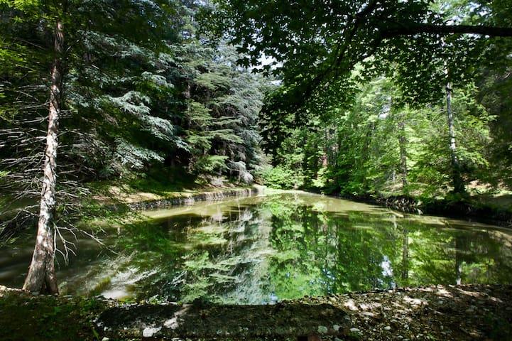 Maria Chiara, Pool & Botanical Park