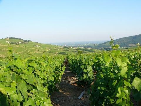 Gîte rural en Bourgogne du Sud