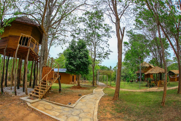 La Pentera -Apricus - Standard Tree House