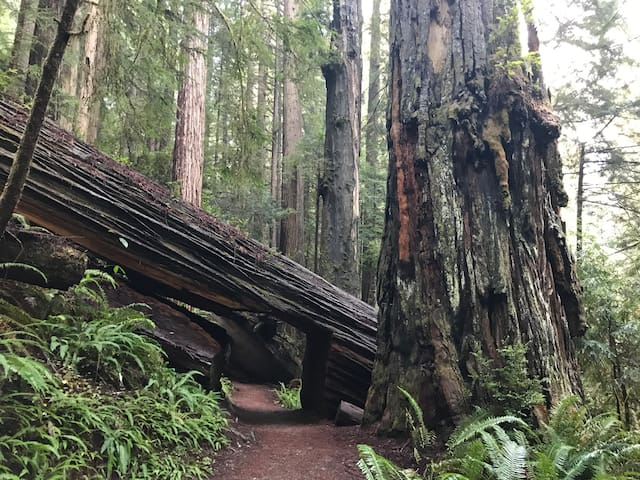 River House 2Bd/2Ba 8 Beds Hike the Redwoods