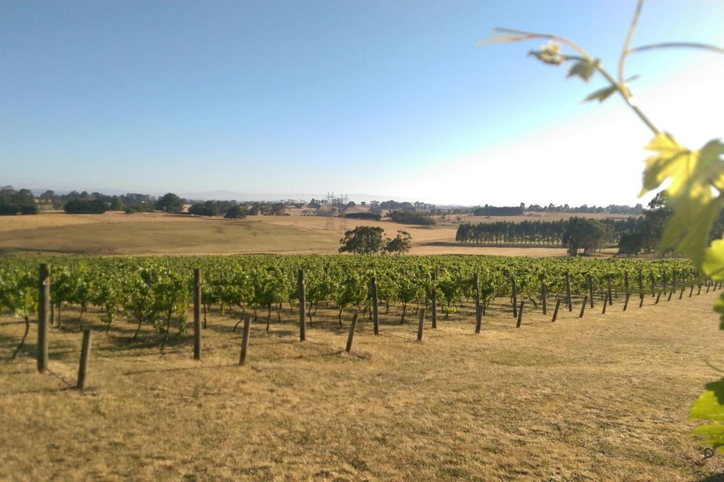 Views over the vineyard and to Mount Baw Baw