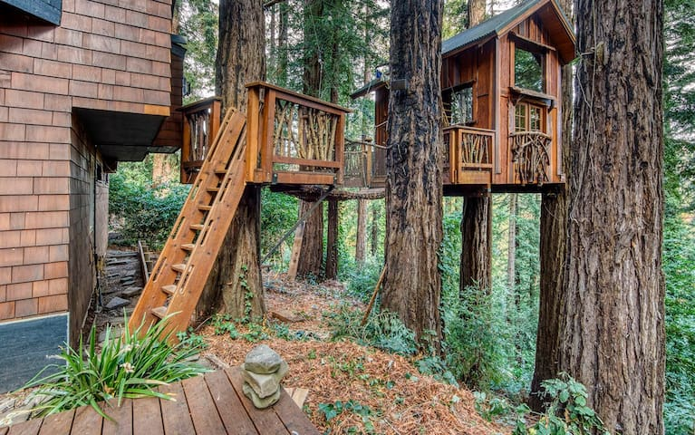 A treehouse in the sky.  A home in the redwoods.