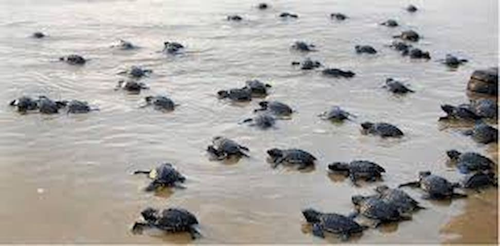 Velas - The Turtle Breeding Village 4