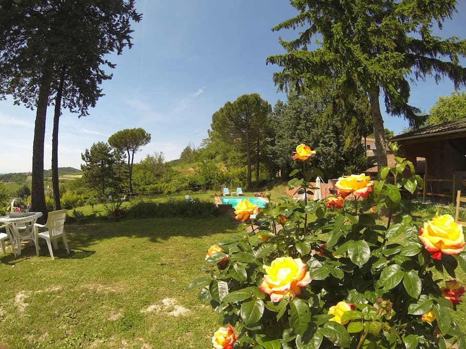 The garden and the swimming pool - La piscina, il giardino e le rose