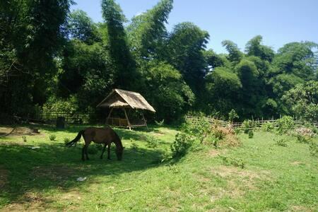 Hacienda Paragua Farm Camp