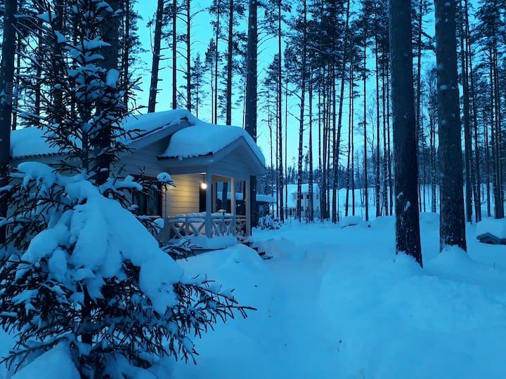 Уютный домик в сосновом лесу на берегу залива.