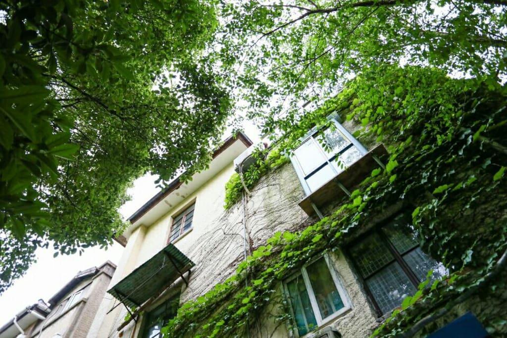 茂密的绿叶滕包裹这个墙面
