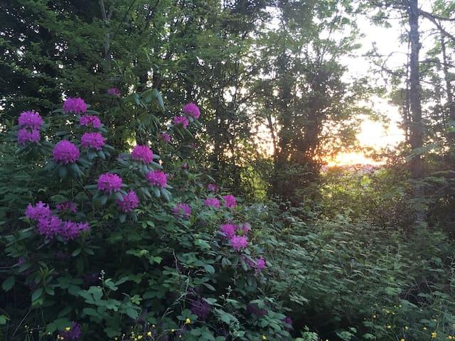 Powell Butte Nature Retreat Apt