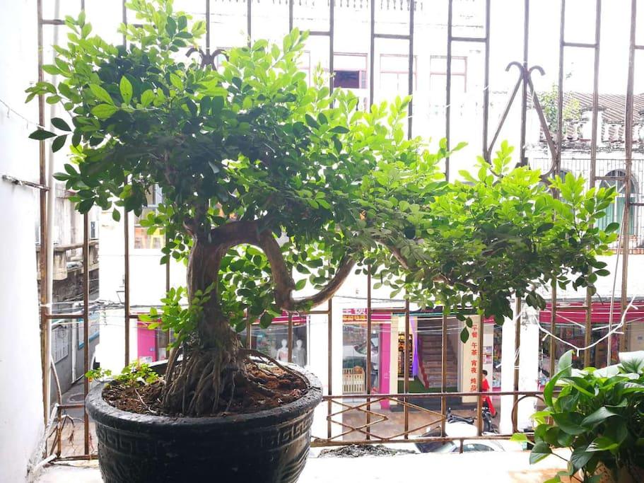 自助厨房的龙形盆栽