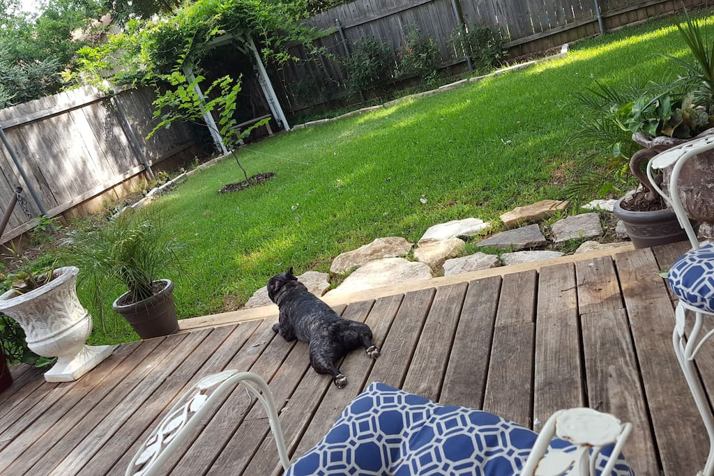 Deck in Backyard