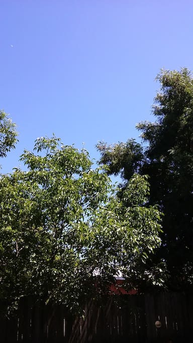 This is the view from our deck. At 10:00 AM the sun is just above the middle tree. Clear line of sight.