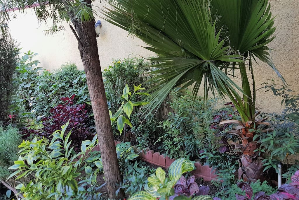 Refreshing green space at the entrance of our compound