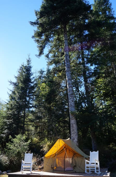 The Tent, pictured beneath a beautiful overhanging Fir tree