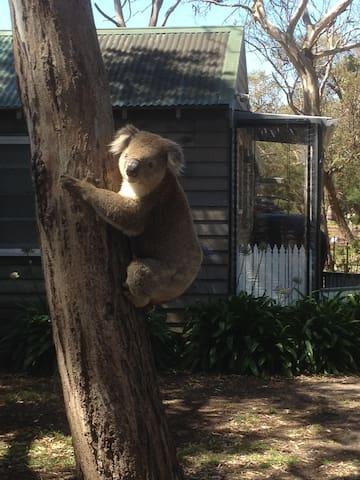 Koala Kottage