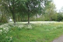 Medemblik: fiets/wandelpad  langs de Grote Vliet.