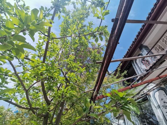 半夏院子,在玉龙雪山下的别墅区里,离束河古镇很近,出小区就是公交站,直达丽江古城等景区。