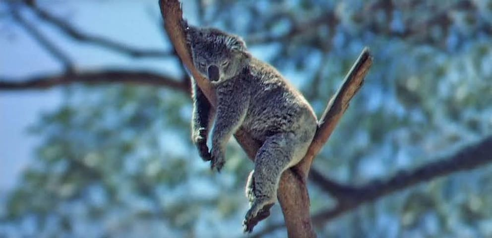 Camp Drop Bear