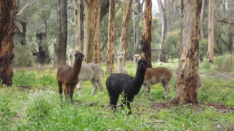 Kangaroo Cottage- simple tranquility