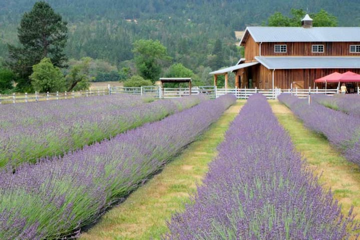 Lavender Fields Forever RV Site