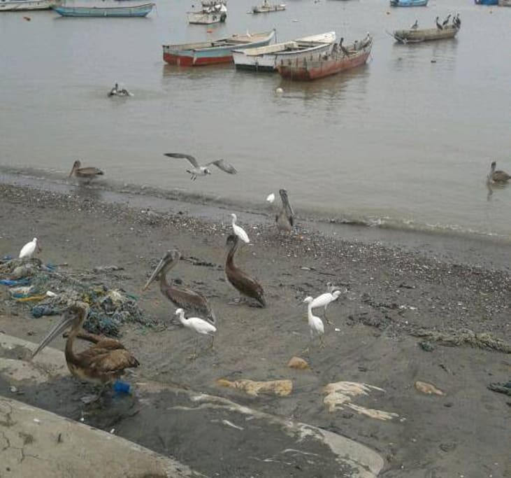Pescadores, a 25 minutos, compra de pescado fresco y a buen precio.