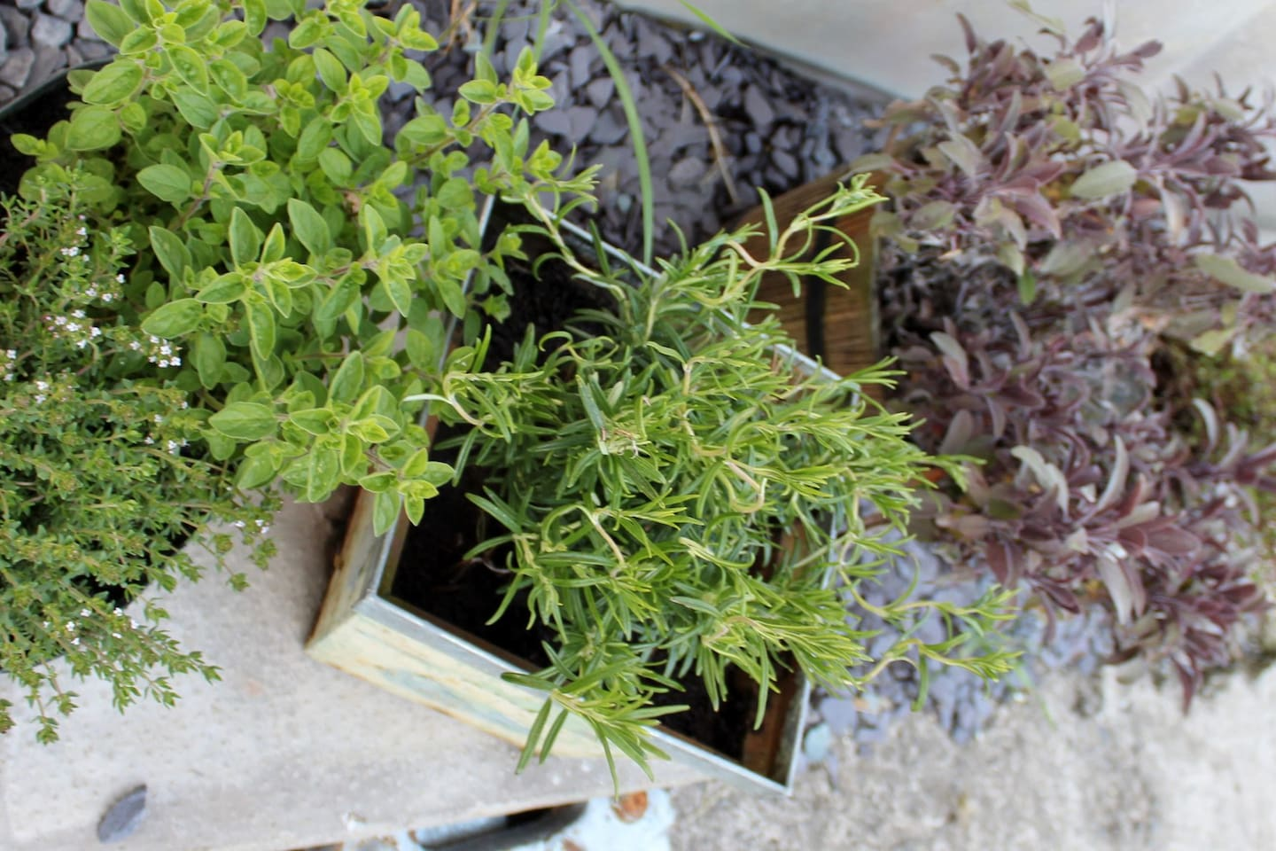 Herbs for your Pizza...help your selves