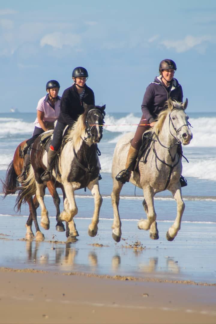 Experienced horse trial guides
