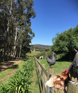 The Beautiful Barn at Full Gallop Farm Hobart - Allens Rivulet