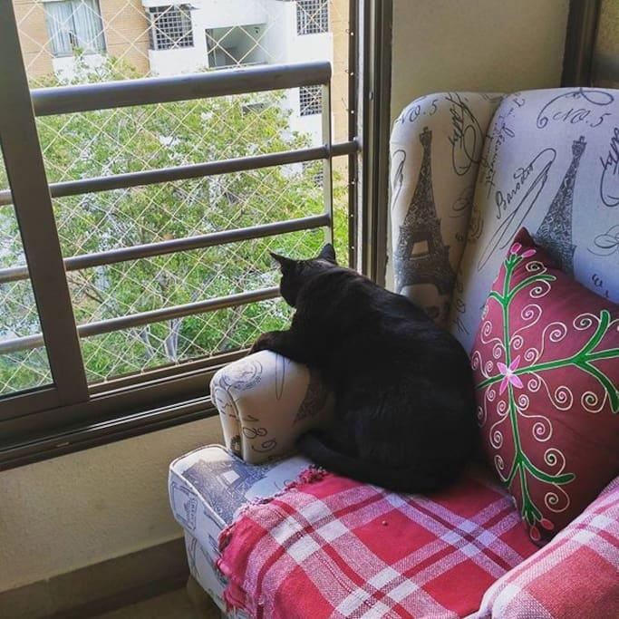 Luchito Mirando por la Ventana del Dormitorio #Catlovers