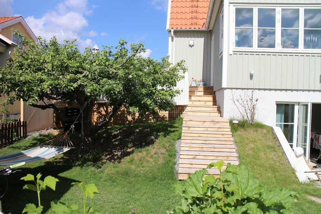 Trappa från trädgård till altan och hängmatta i skuggan under äppelträdet