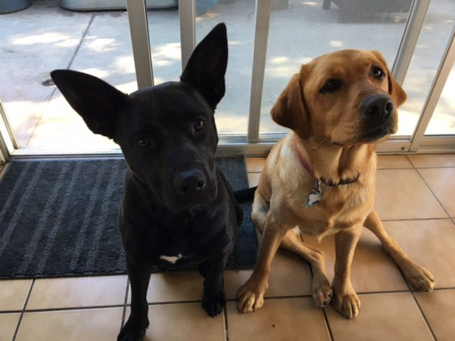 Share the house with Jack and Ruby, our two loving dogs.  They stay in the backyard all day and sleep in our master at night.
