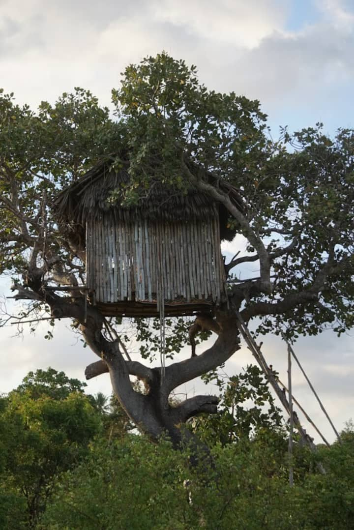Mida Creek Nature Camp - Tree House
