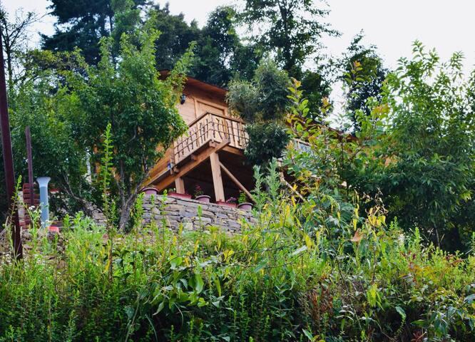 Treehouse Resort, Oak