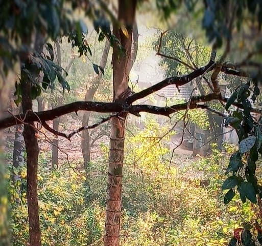 Zen Forest Jungle View