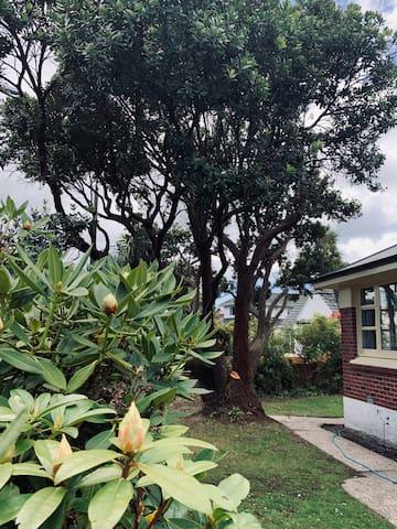 Magnolia Suite on Highgate