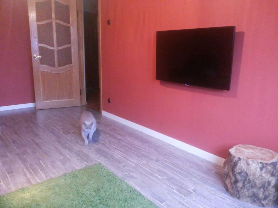 Our friendly pet in your room :)  / Наша дружелюбная кошка в вашей комнате