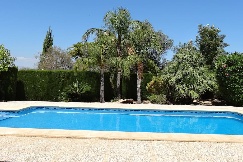 Stunning larger than average pool with mature palms