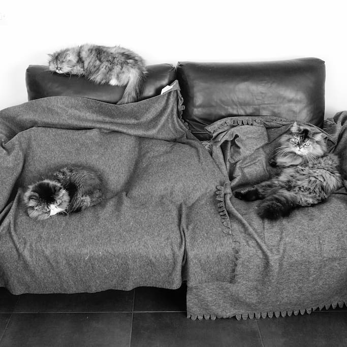 The 3 cats!