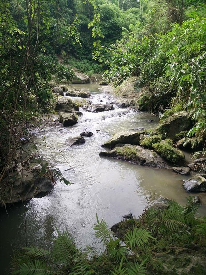 Stream at the back of the farm.