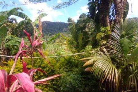 MANGO TREE ROOM