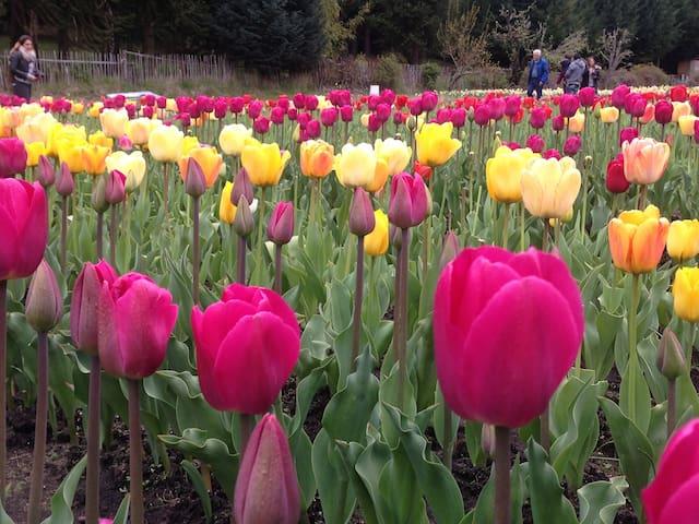 Vení a disfrutar la primavera!!!!