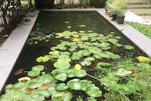 The lotus pond in the garden