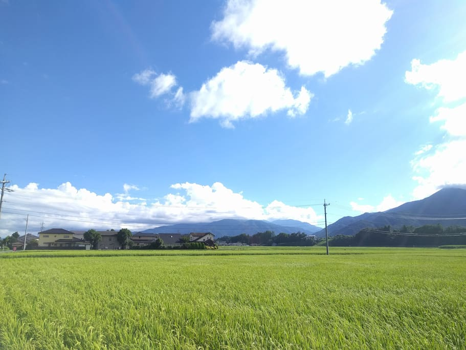 View from my garden. 家から見える山と田んぼ。のどかです。