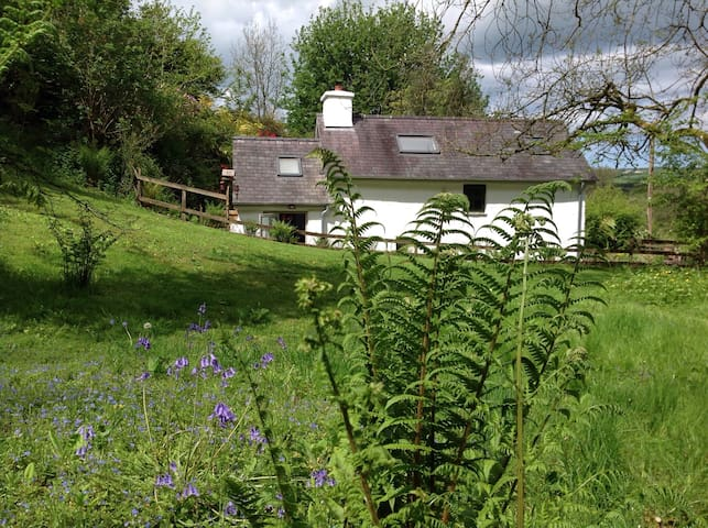 Dog friendly cottage set in a wood  Cardigan Bay