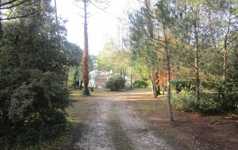 Les Grands Bois : grand studio dans la forêt
