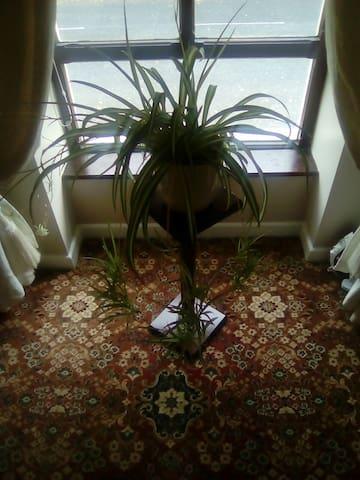 Marion's BnB Room no.2