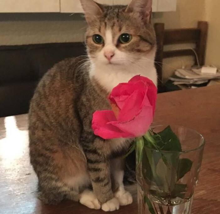 Nuestra limpia y agradable gatita, Flora