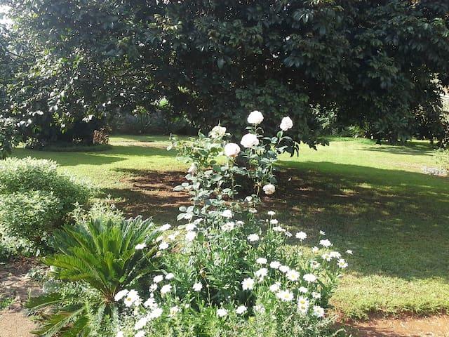 Take a relaxing walk in our garden